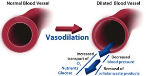 nasal-breathing-vasodilation