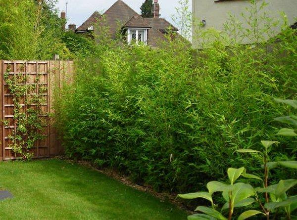 Garden Design Garden Design with Landscape Design, Bamboo - garden irrigation design