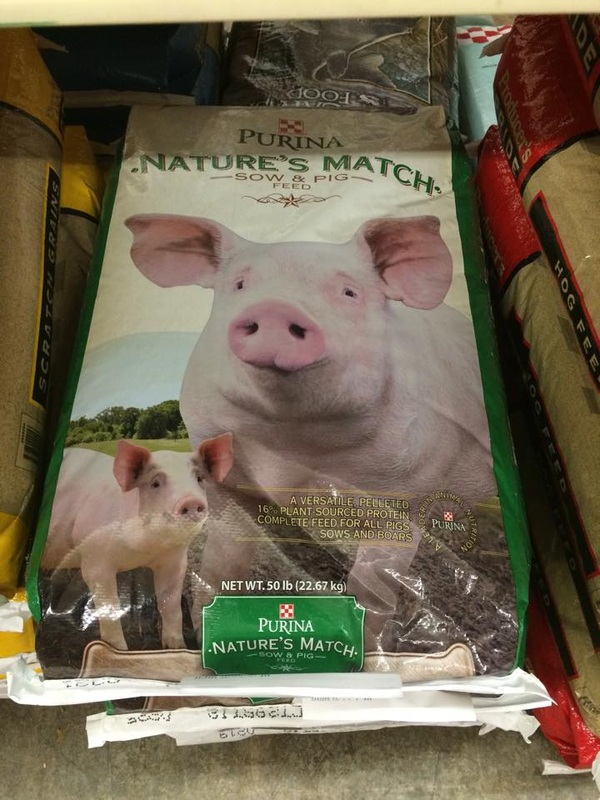 Mini Pig Nutrition Are You Feeding Your Pig Right? - Mini Pig Info