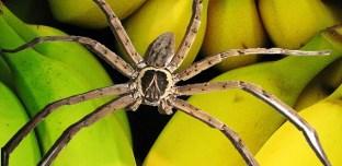 Allemagne : Panique dans un supermarché à cause d'une araignée