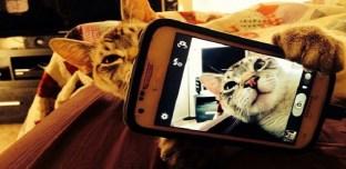 Arabie Saoudite : Un Cheikh interdit les selfies avec des chats