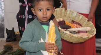 Temozón norte, será sede inaugural de las ferias de las semillas nativas