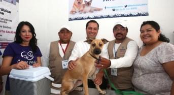 Inaugura el alcalde el primer Módulo Veterinario Municipal para Perros y Gatos