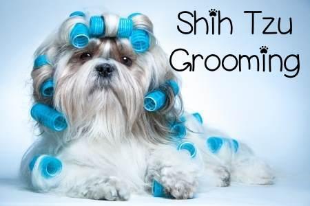 Cute Shih Tzu Puppies Wallpaper Grooming The Shih Tzu An Overview