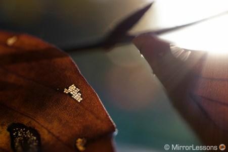 zeiss touit 50mm review macro
