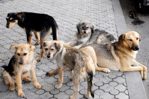world-animal-day-yerevan-street-dogs_0-1