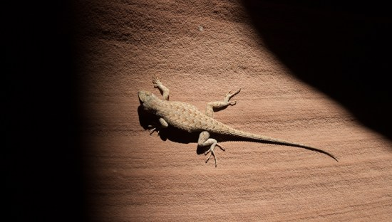 Lizard Inside Antelope Canyon