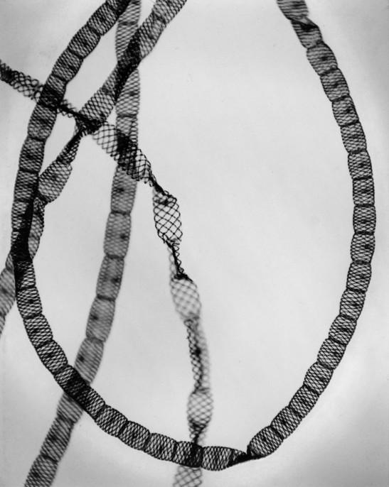 arl Strüwe. Alga-Freshwater (Alge Spirogyra setiformis), 1928 Gelatin silver print, printed 1960s-1970s. 9 11/24 x 7 1/12 in. Edition 1 of 7; Stamped by photographer verso.