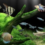 Dream Aquarium XP Screensaver 1.0