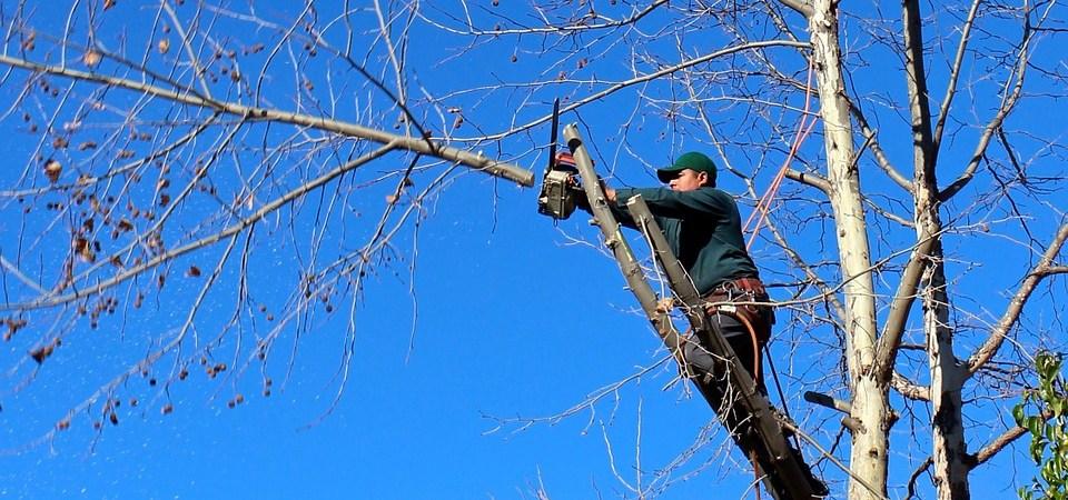 Man tree trimming