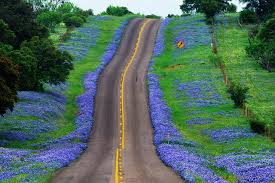 #blubonnets#texas hill country