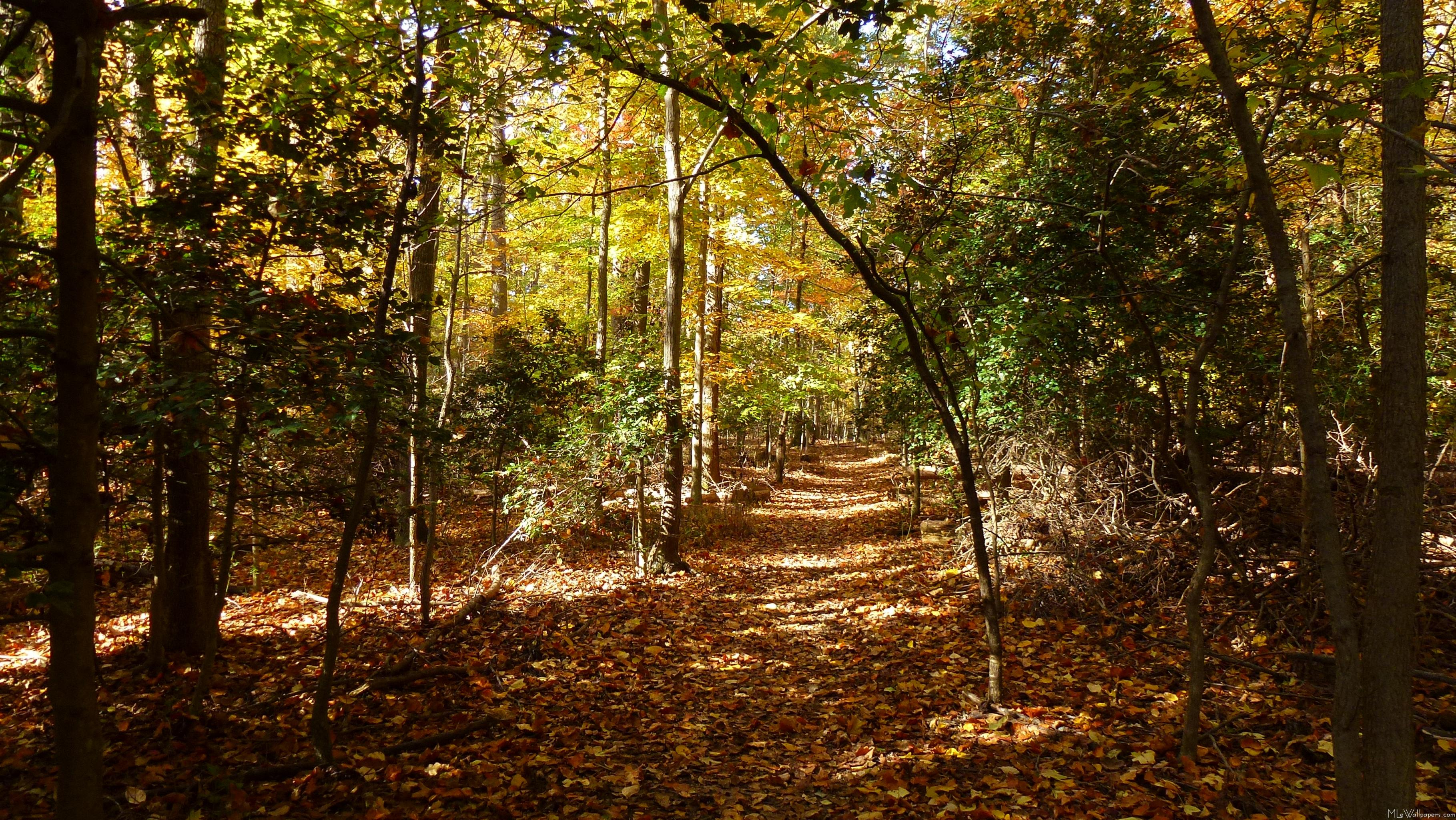 Fall Wooded Wallpaper Mlewallpapers Com Greenbelt Park In Fall I