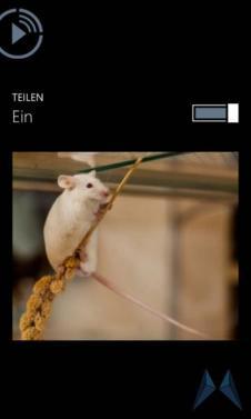 externe wiedergabe windows phone 8 nokia (6)