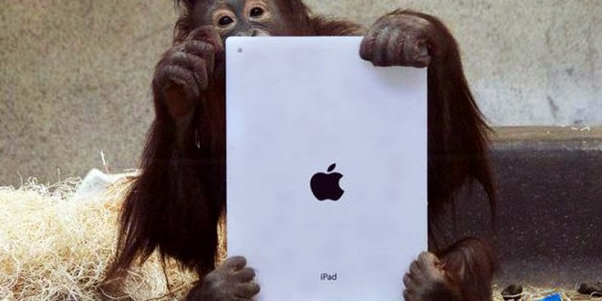 orangutan-on-ipad-1