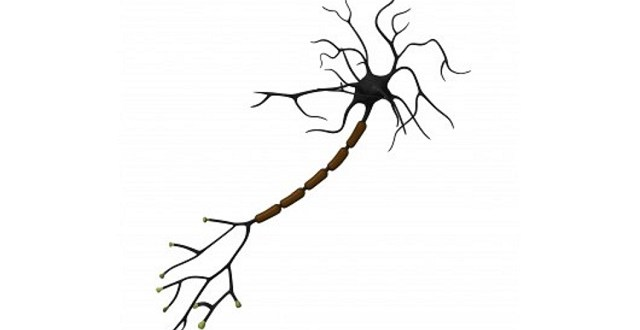 multiple-sclerosis-myelin-tolerance