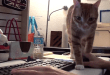 working-from-home-cats