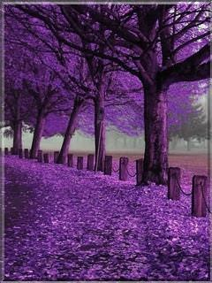 Fall Leave Wallpaper Download Purple Autumn Wallpaper Mobile Wallpapers