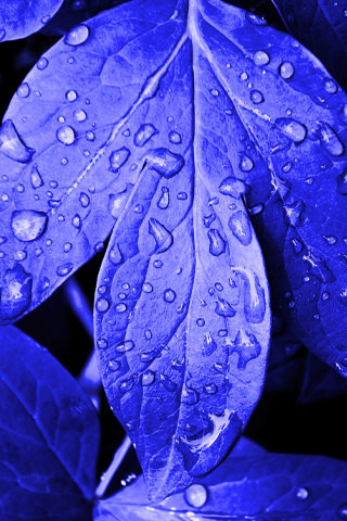 3d Touch Wallpaper For Android Download Blue Drops Leafs Iphone Wallpaper Mobile
