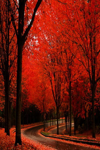Fall Autumn Wallpaper Free Download Red Autumn Nice View Road Iphone Wallpaper