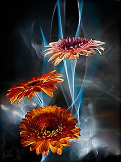 Download 3D HD Flowers Mobile Wallpaper | Mobile Toones