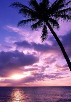 Download Purple Paradise Mobile Wallpaper   Mobile Toones