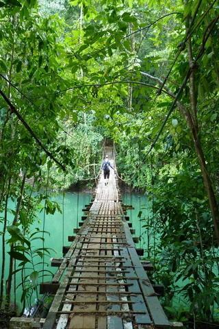 Mobile Phone Fall Wallpapers Download Costa Rica Footbridge Drakes Bay Nature Iphone
