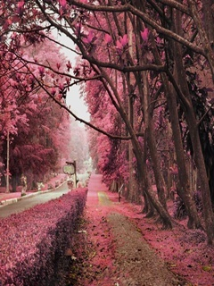 Fall Desktop Wallpaper Themes Download Pink Autumn Mobile Wallpaper Mobile Toones