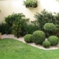 Entenda sobre plantas para jardim que são bonitas