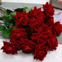Rosas colombianas - capricho da natureza confira