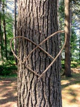 lake tree heart (Jeannie)