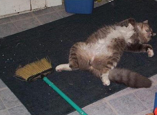 spring cleaning cat
