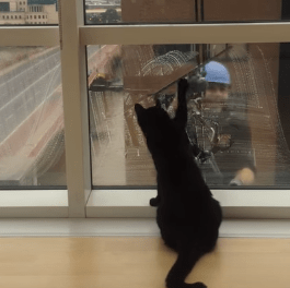 Cat Tries To Destroy Man Washing Windows, Fails Miserably [Video]