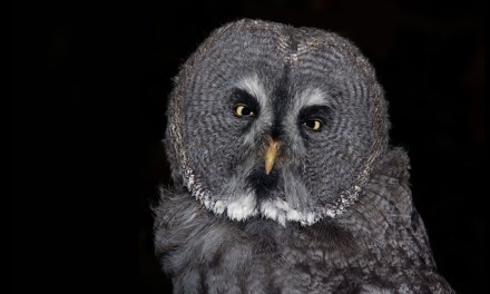 Study: Night Owls <i>Might</i> Be Smarter, Stronger, Better Looking
