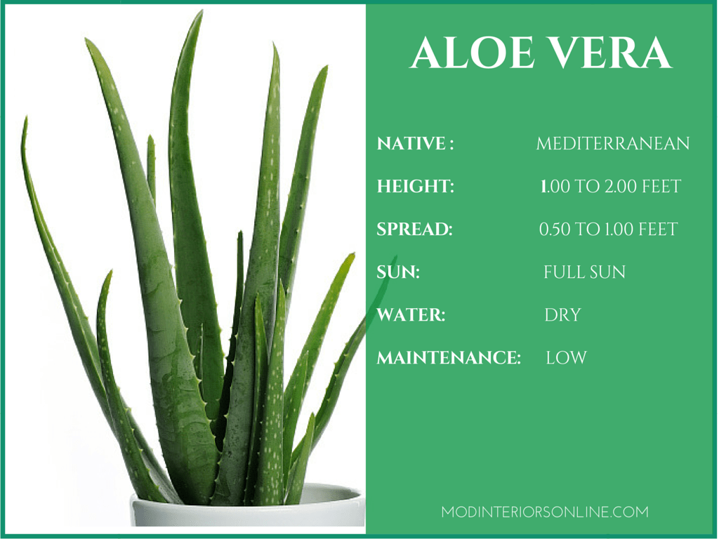 the characteristics and the benefits of the aloe plant It must be also mentioned that the aloe plant has an incredibly rich and  according to the characteristics of  as for it has its benefits every type.