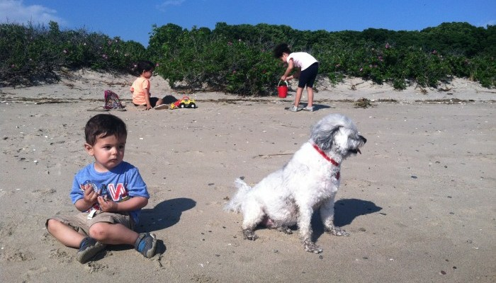 Summer Travel Fun With Your Dog and Pup-Peroni