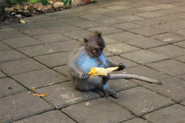 bali-monkey-forest-2