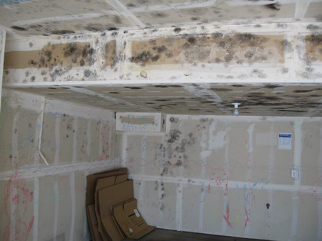 Mold In The Garage     Health Risks, Removal