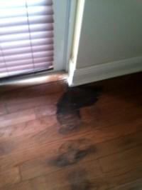 mold on wood floor under carpet - Home The Honoroak