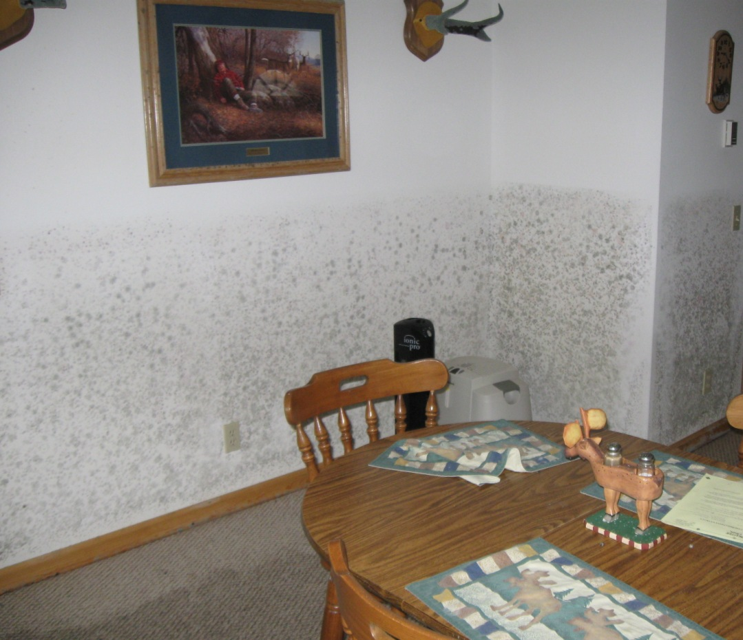 how do you remove mold from bathroom walls mold damage what to do download