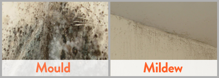 Mold Vs Mildew Differences