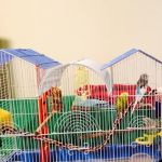 Let's do a Pinterest Lesson! My Granddaughters Birds join in.