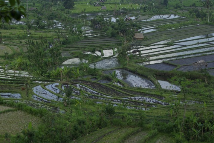 Rice-Terraces-near-Tirta-Gangga-Eastern-Bali-1024x685
