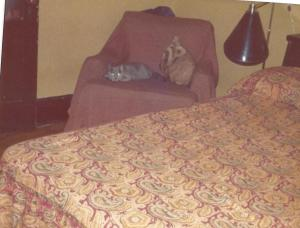BEDROOM CHAIR WITH CAT