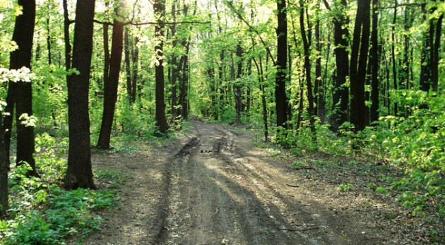 old forest road thru the woods