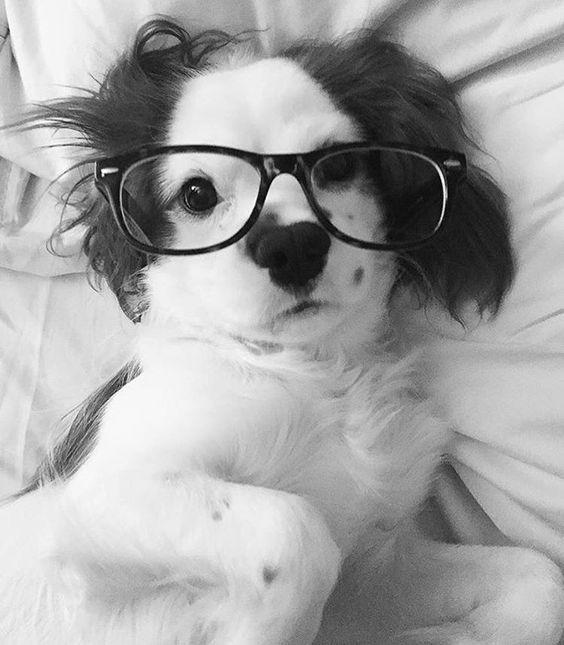 39glasses-dog