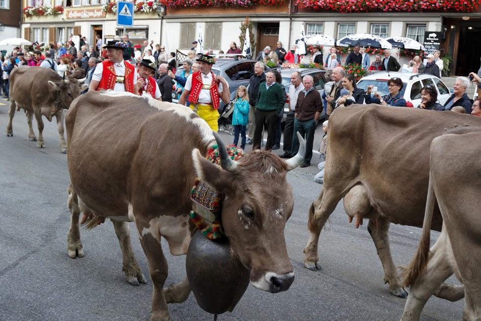 Swiss Cow Parade- Alpabfahrt in Appenzell