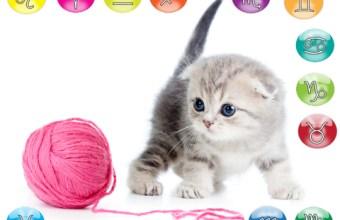 Oroscopo mese di agosto per il tuo gatto