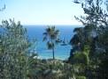 jardin de bord de mer palmier olivier