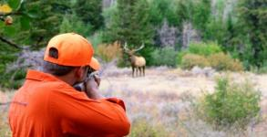 Hunting Elk in Warm Weather