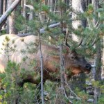 NEW ELK AND DEER PERMIT APPLICATION PACKET AVAILABLE NOW: DEADLINE IS MARCH 15